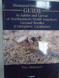 Illustrated Identification Guide to Adults and Larvae of Northeastern North American Ground Beetles (Coleoptera: Carabidae),